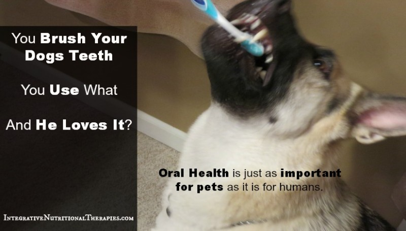 You Brush Your Dogs Teeth, You Use What, And He Loves It?