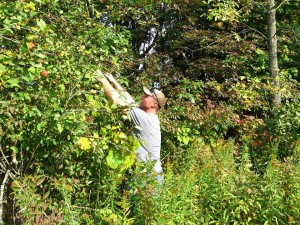 applepicking 1