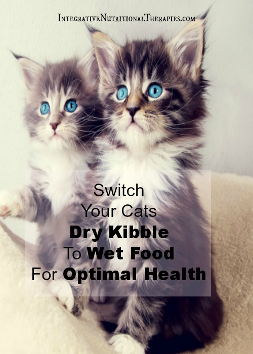 Switch to Wet Food Tall