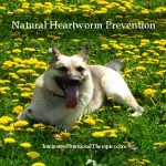 natural heartworm