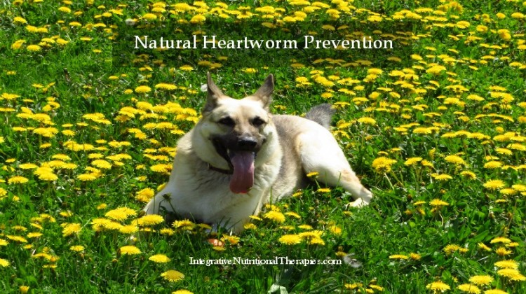 Natural Heartworm Prevention