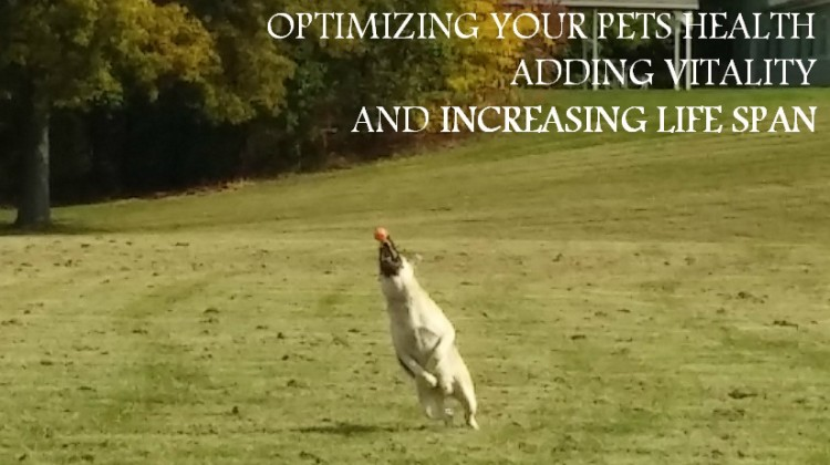 Optimizing Your Pets Health, Adding Vitality and Increasing Life Span