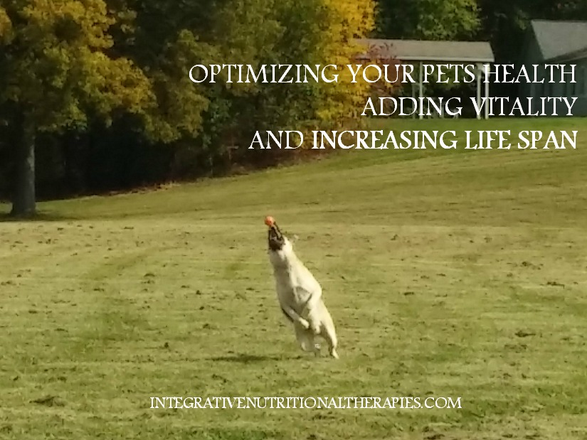 optimizing your pets health