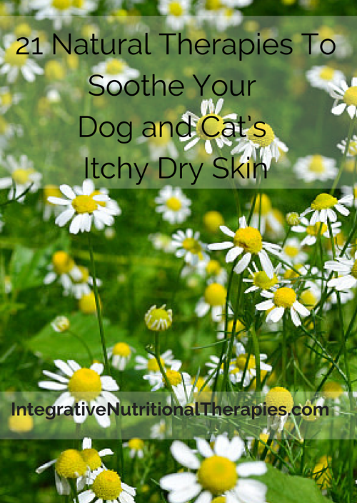 21 Natural Therapies To Soothe Your Dog tall