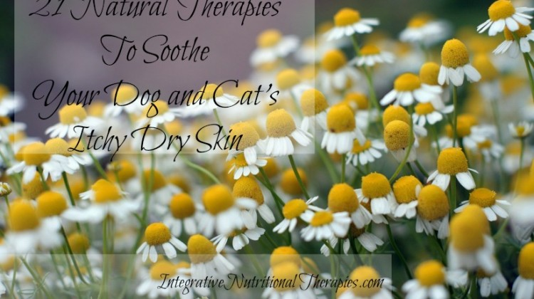 21 Natural Therapies To Soothe Your Dog and Cat's Itchy Dry Skin