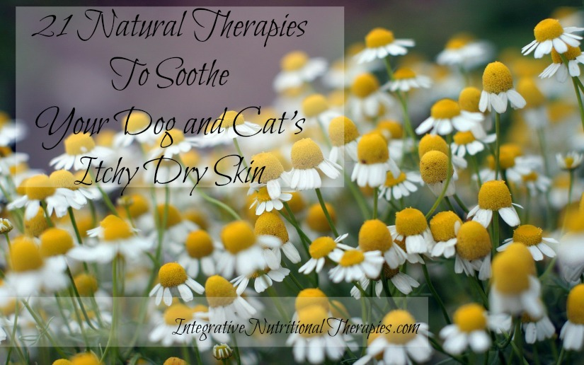 21 therapies for dog and cat dry skin